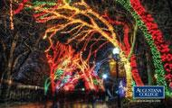 Chicago Alumni Event: Lincoln Park ZooLights